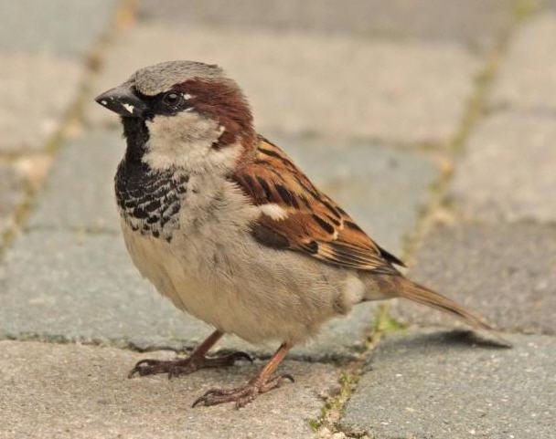Een vogelvriendelijke wijk